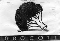 14_brocoli.jpg